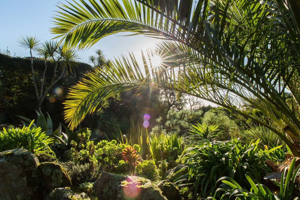 The winter sun shines through foliage in the Tresco Abbey Garden